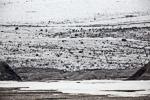 f6z_Lomfjord_11Aug13_224