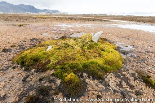 Gallery 5:the west coast - Spitsbergen 2018