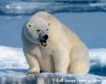 https://www.spitsbergen-svalbard.com/spitsbergen-information/wildlife/polar-bear.html