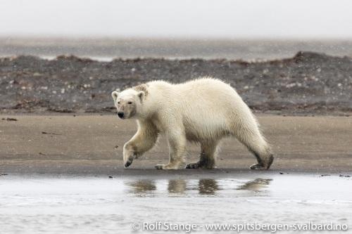 Galleri 4:sørøst Svalbard