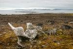 Tusenøyane: Aekongen