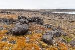 Tusenøyane: Zieglerøya